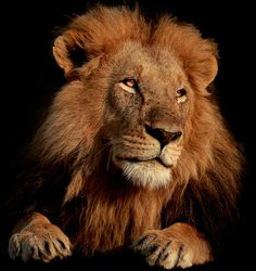 The King  by Vishwa Kiran on 500px
