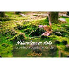 Nos encanta la combinación de colores que podemos disfrutar en #otoño . La #naturaleza  en #Galicia es increíble  #SienteGalicia #GaliciaCalidade #GaliciaMáxica