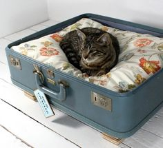 Cute and thrifty animal bed