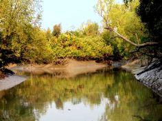 Sundarbans,the biggest Mangrove Forest of the world