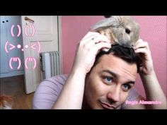 Easter Bunny you bring to me Happy Easter 2017 MIni lop Rabbits meowing Dancing Music Happy Easter, Easter Bunny, Mini Lop Rabbit, Dance Music, Bring It On, Youtube, Kids Songs, News Anchor, Writer
