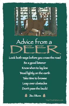 Spirit Totem Animals:  #Advice from a #Deer.