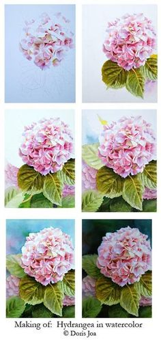 Pink hydrangea - 4 tips for painting petals (watercolor)