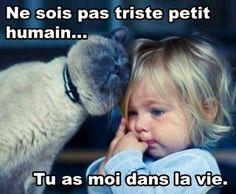 No este triste  por pasado pequeño humano. Tú me tienes a mí en la vida  Mème – Québec Meme +                                                                                                                                                                                 Plus