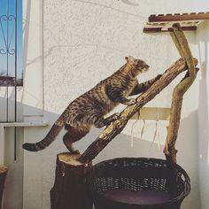 Easter project: new cat tree. Done  #luckythecat #love #cute #catsofsalzburg #unterfoehring #germany #cat #meow #ilovemypet #catlovers #lovekittens #instapet #catsagram #kitten #kitty #catstagram #kittycat #catsofinstagram #ilovemycat #catlove #catoftheday #furry #cats_of_instagram #cats #catlife #katze #katzenliebe #miezekatze #cattree