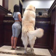 "miraculous-views: ""Thats a big dog """