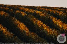 Sun Setting on the Vines by John Armstrong-Millar. View more food and wine photography images at https://www.pinkladyfoodphotographeroftheyear.com/commended-gallery/