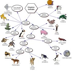 Page with resources to use with units on evolution and natural selection, appropriate for 8-12th grade.