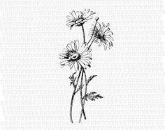 Image antique marguerites sauvages fleur par luminariumgraphics