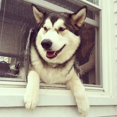 Here is a dog proving that smiles are available even when you're stuck in a rut. | 21 Dogs Who Will Make You Believe In Happiness