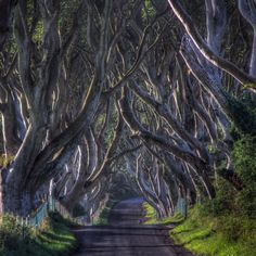Dark Hedges, Ireland | 26 Real Places That Look Like They've Been Taken Out Of Fairy Tales