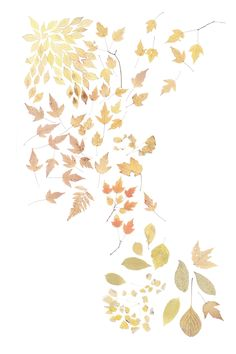 pale beauties (mary jo hoffman)