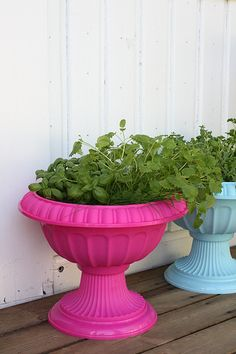 painted plastic pots add some colour to your deck or patio.
