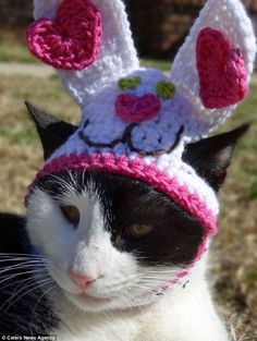 This lucky cat had bunny ears made for his Easter celebrations