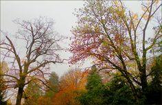 November im Morgennebel - Jahreszeiten - Galerie - Community