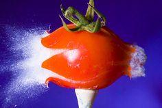Tomato Juice by Alan Sailer, via Flickr