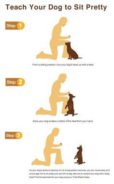 DOG TRAINING TIPS 46