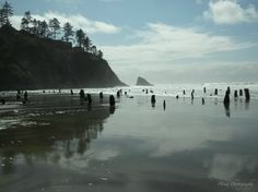 Ghost Forest in Neskowin, Oregon.  2,000 year old petrified forest buried in the surf.