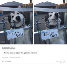 These puppers don't care what you think, they live by their own rules and should each try to be a little more like them.