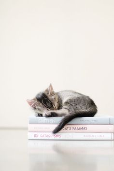 Wouldn't mind sharing my space and books with this lovely creature!