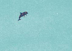 by.bwebwe.d_b  my illust  flying