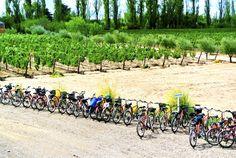 Bodegas By Bike. Mendoza, Argentina