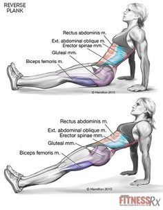 Reverse Plank To Strengthen Your Core And Lower Body