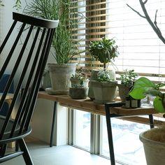 スタッフの自宅でのグリーンの取り入れ方を参考に、グリーン導入のヒントを解説していこうと思います。 Pots, Interior Styling, Interior Design, Foliage Plants, Indoor Plants, Interior Architecture, Ideal Home, Bar Stools, Sweet Home