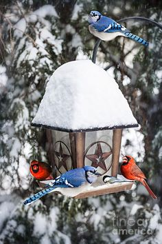 Watching birds come to the feeder in winter.