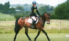 Beautiful all-rounder for sale for sale | HorseDeals.co.uk
