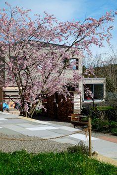 Spaltholzwände «Wooden Heart» schaffen zusammen mit der Zierkirsche ein Gartenzimmer. Plants, Cherries, Garten, Planters, Plant, Planting