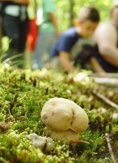 Gombamánia: Egy kiállítás képei Stuffed Mushrooms, Potatoes, Vegetables, Food, Stuff Mushrooms, Potato, Essen, Vegetable Recipes, Meals