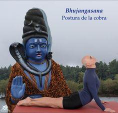 Bhujangasana. Postura de la cobra