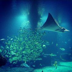 The Dig | Atlantis Resort | Nassau Paradise Island