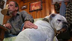 In Tennessee, a disabled dog jumped a fence in order to save his owner's life. When Billy Collins was inside his house and suddenly fell on the kitchen floor,