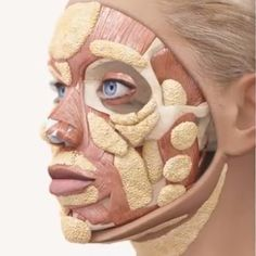 Distribution of fat pads on the face. Important areas for replacement with…