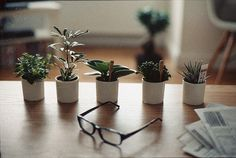 little potted plants