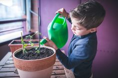 Want to make a positive contribution to your family's health, budget and eco-footprint? One of the simplest ways is to grow more food.