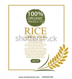 Rice. Vector illustration. - stock vector