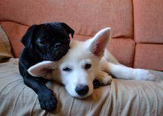 Hermosos cachorritos