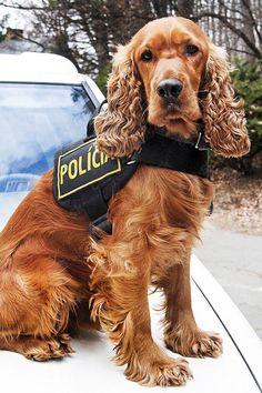 Bady odslúžil na polícii 5 rokov. Triasli sa pred ním díleri i konzumenti narkotík.