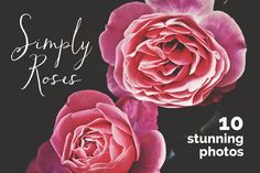 Simply Roses 10 stunning fine art floral photographs