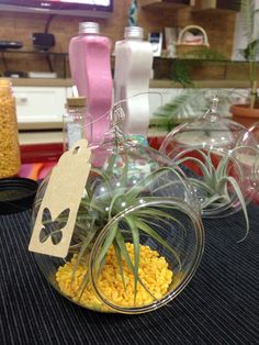Air plant decoration in the making :)