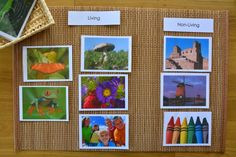Other printables we have used are Families or Mother/Baby Cards, Initial Vowel and Consonant Cards, Parts of a Leaf Cards, Sequencing Cards. Sometimes I browse printable sites and bookmark what captures my attention and what I find that Otis might like.