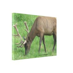 >>>Low Price Guarantee          	Elk Eating Grass Wrapped Canvas Gallery Wrapped Canvas           	Elk Eating Grass Wrapped Canvas Gallery Wrapped Canvas so please read the important details before your purchasing anyway here is the best buyDeals          	Elk Eating Grass Wrapped Canvas Galle...Cleck Hot Deals >>> http://www.zazzle.com/elk_eating_grass_wrapped_canvas-192182512458283665?rf=238627982471231924&zbar=1&tc=terrest