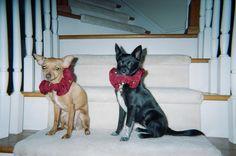 Pumpkin and Bella 2005