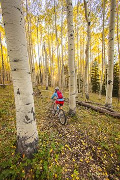 Mountain biking in the La Sal mountains near Moab, Utah. This is a great pic to describe how mountain biking feels.