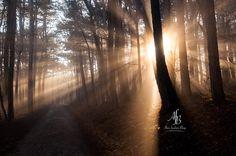 Sunday Mood Wood / Wald / Sunset / Sonnenuntergang / Natur / Nature http://www.alnisfescherblog.com/sunday-mood-week-51-2016/