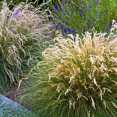 To create a sense of flow, use curving borders and plants that spill over the edges. Leafy reed grass (Calamagrostis foliosa is pictured) up against an concrete-edged lawn, with blue salvia behind.