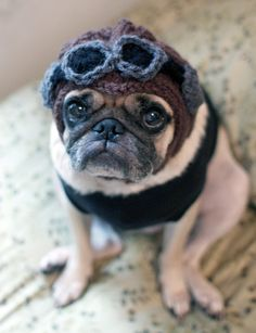 57 Best ♥ Pug Dogs in Hats ♥ images  9eefbc3abfb0